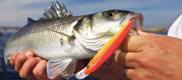 Bass on a stinger lure