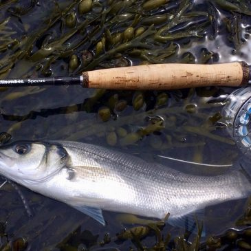 Local Bass Anglers needed to help with the Plymouth University I-Bass tagging programme: